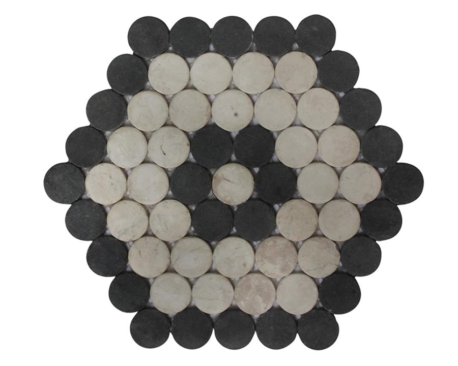 Honeycomb Moon Coral